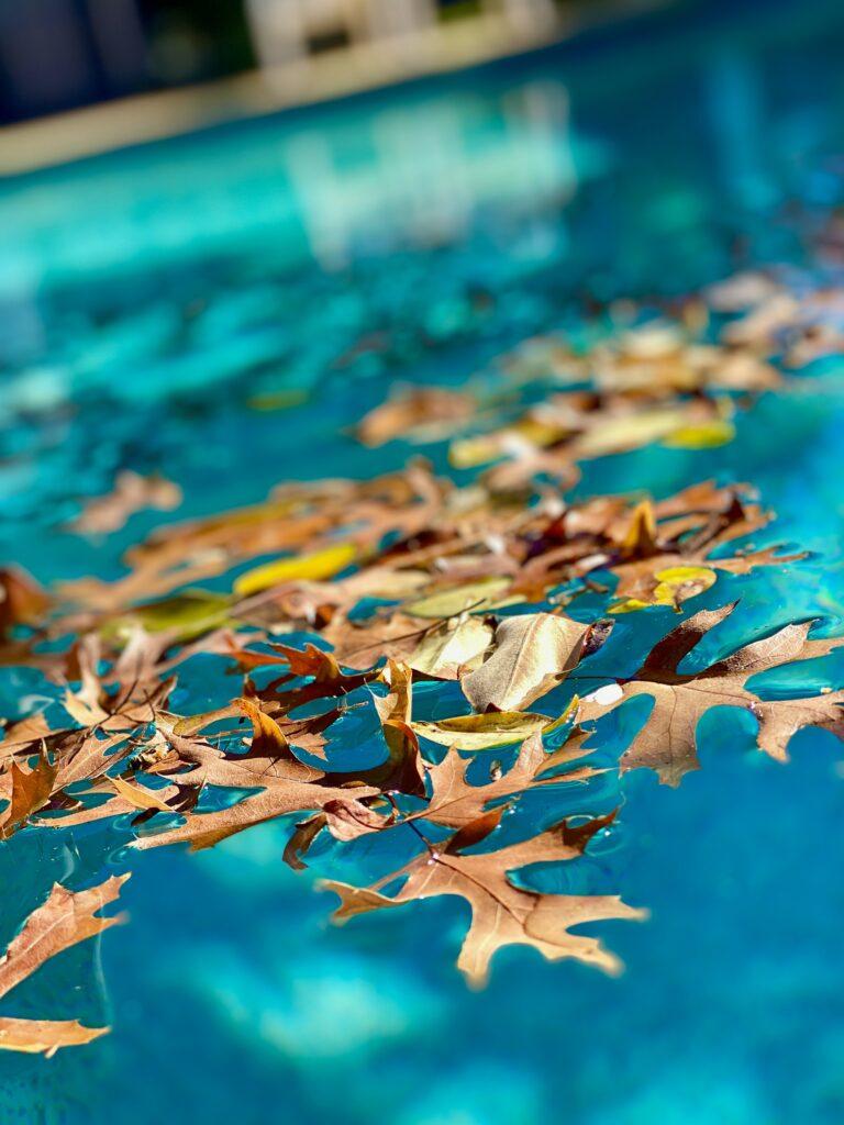 Folhas na piscina